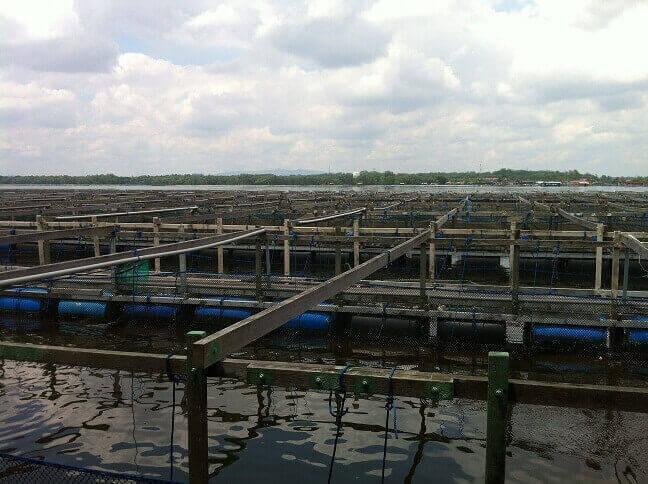 Live Seafood farm