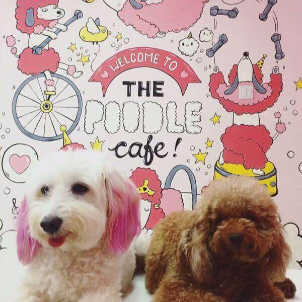 Singapore First Themed Pet Cafe For Sale