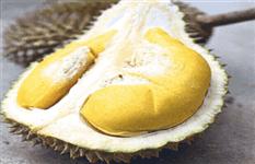 PENANG Balik Pulau durian farm offer! Below market price! 15acres !