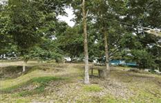 马来西亚 猫山王榴莲园 出售 Mature Durian Plantation in Machap (Johor, West Malaysia) for Sale