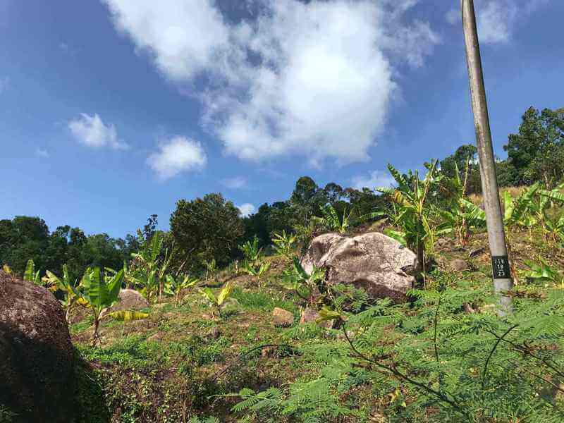 Penang Durian Farm, 15 acres, 2.3m, rare and below market price!