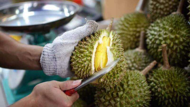 Invest In the evergreen Durian Plantation!