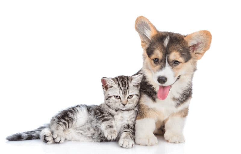 400% Growth Online Pet Accessories Store