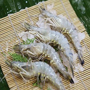 Profitable Seafood Processing & Wholesale Biz ! 30% Margin! 90670575