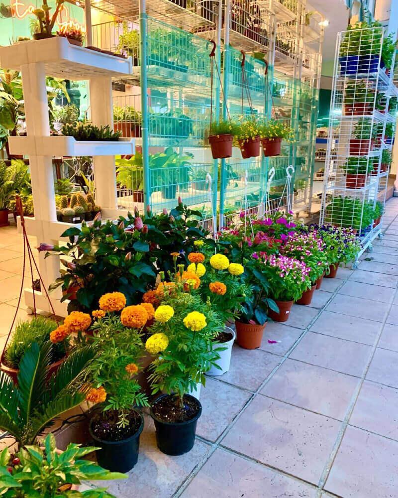 Boutique Plant Shop At Tampines