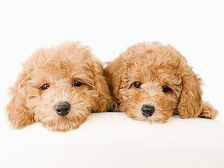 Profitable Pet Shop(Puppy) For Sale