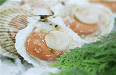 Fire Sale ! Profitable Seafood Processing & Wholesale Biz ! 30% Margin! 90670575